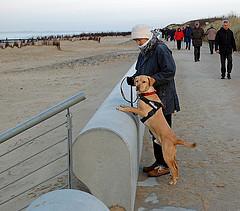 strand hund photo