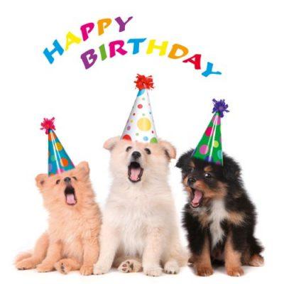 DIE-PARTY-HUNDE-Set-mit-6-Einladungskarten-fr-den-Kindergeburtstag-inkl-6-Umschlgen-lustige-Geburtstagseinladungen-fr-Mdchen-und-Jungen-geeignet-0