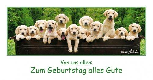 Keith Kimberlin Geburtstagskarte Hunde Labrador in Blechwanne Panoramakarte 11x22 cm
