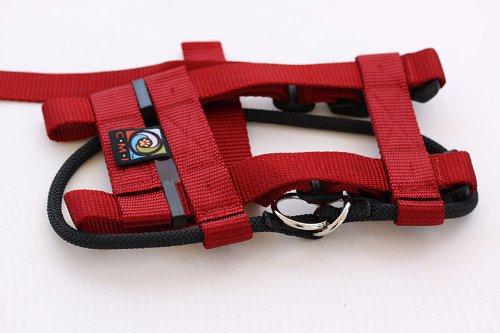 Cesar Millan Dog Collar Amazon