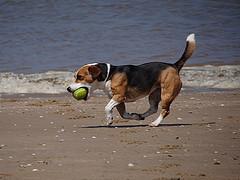 hund strand photo