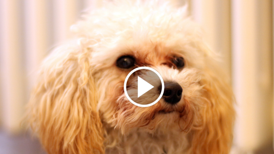 Was ihr beachten müsst, wenn ihr mit eurem Hund verreist – Die Life Hacks für Reisende mit Hund