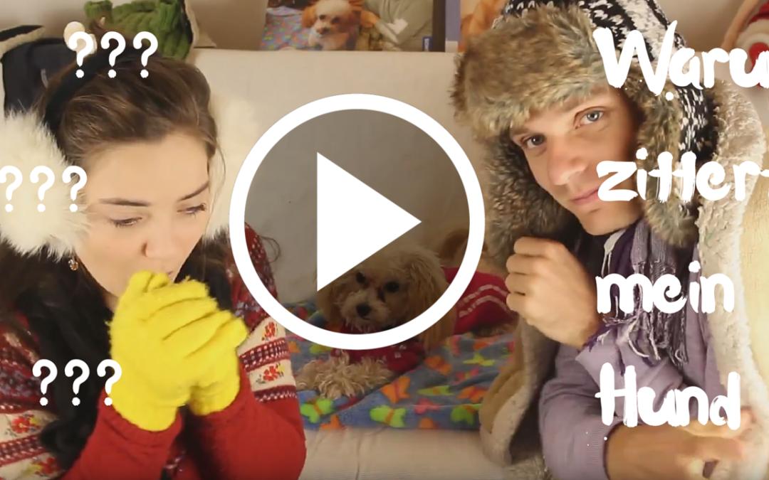 Warum zittert mein Hund?