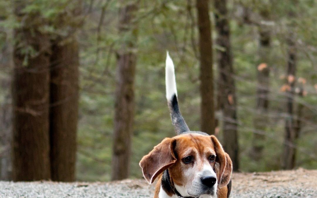 Hunde Foto: Mein süsser Hund!