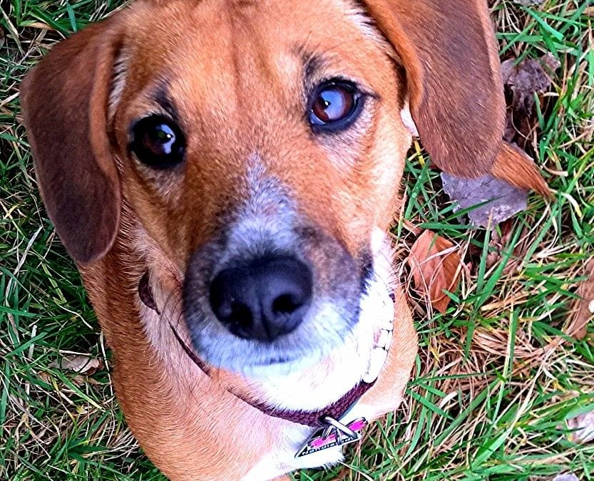 Hunde Foto: Herzenshund