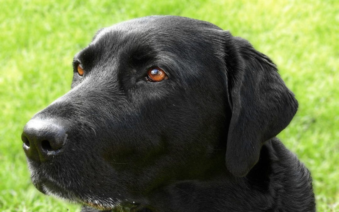 Wie Sie Ihren Hund vor Leishmanien-Parasiten schützen