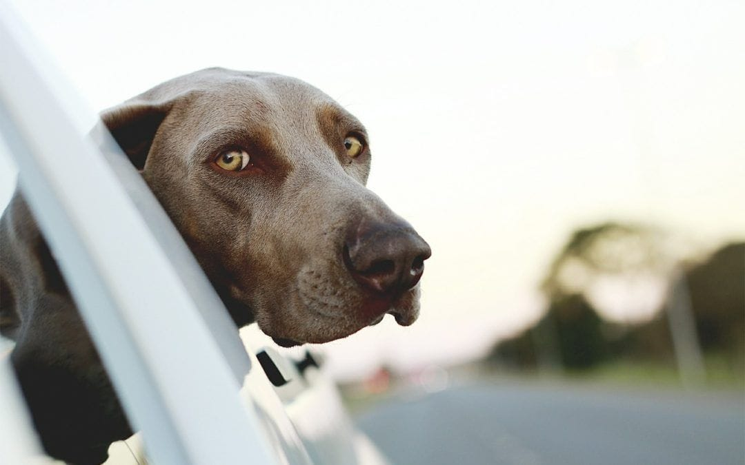 Hunde aus Spanien retten