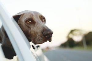 dog-446440_1280