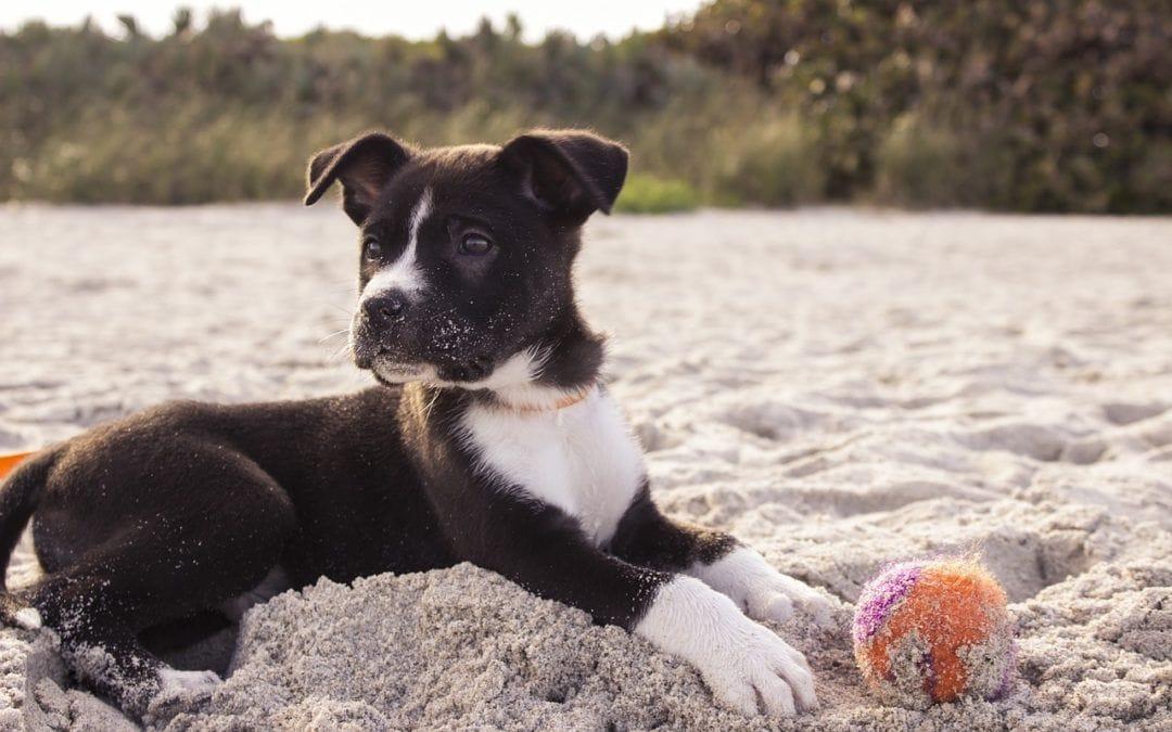 Körbchen gesucht! Hunde aus Mallorca aufnehmen