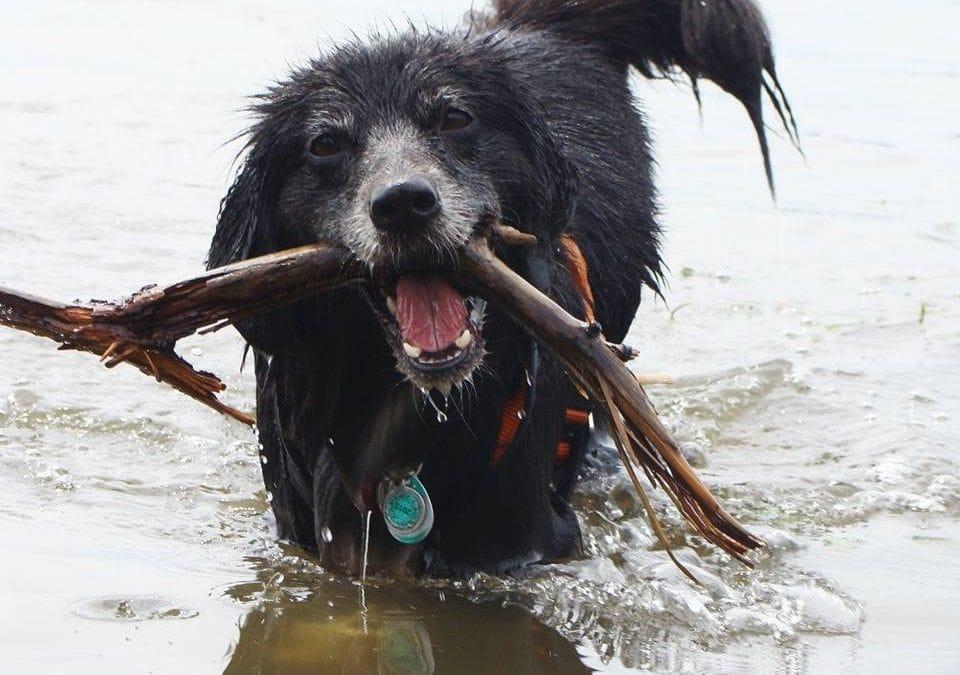Hunde Foto: Kyra sie Wasserratte