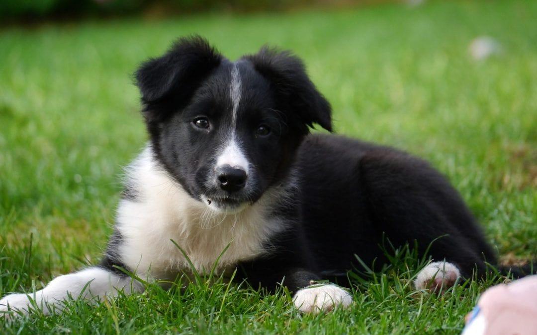 Lohnt sich eine Krankenversicherung für Hunde?