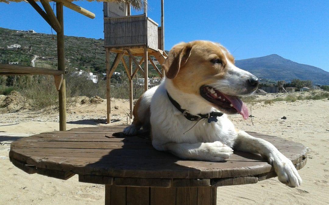 Hundebesitzer: Wichtige Tipps für die Urlaubsplanung