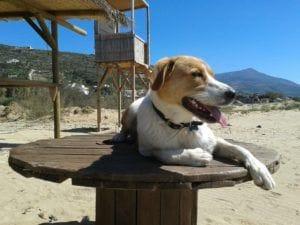 dog-140098_1280