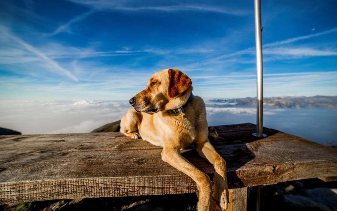 Warum Hunde Mischlinge echte Familientiere sind