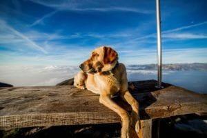 dog-190054_1280
