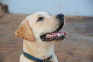 dog-434834_1920