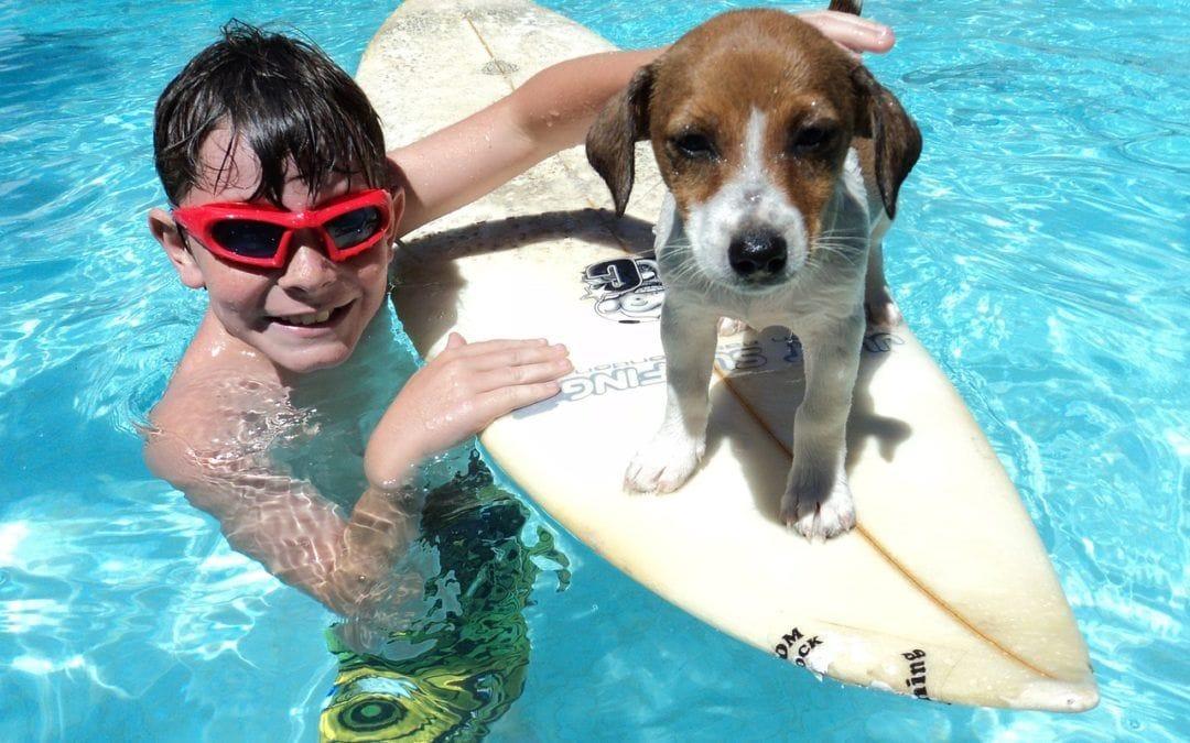 Kinderfreundliche Hunderassen: Welche Hunde eignen sich für Kinder?