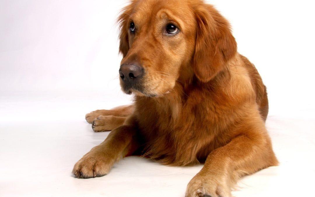 Merkblatt: Tierhaftpflicht für den Hund