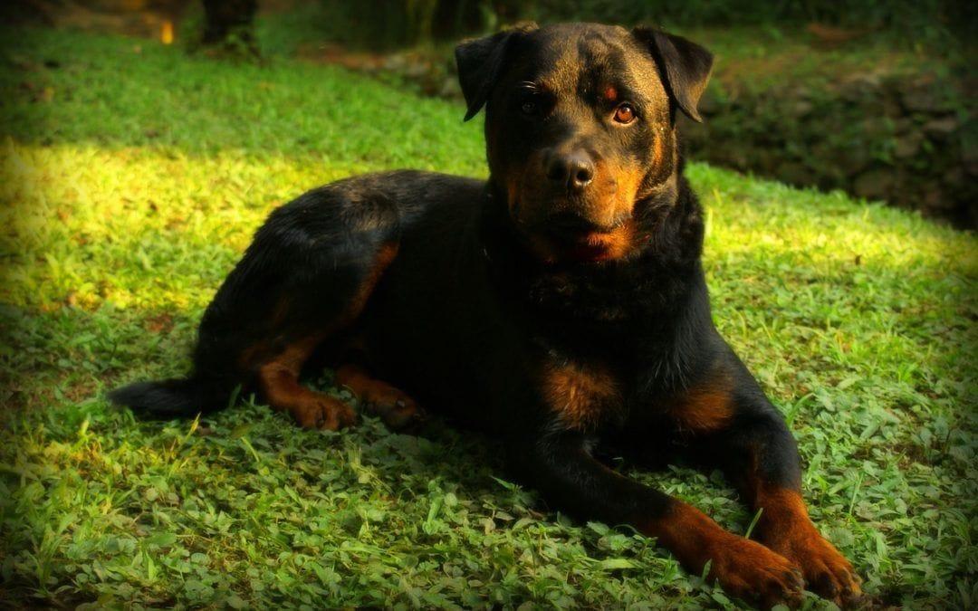 Als Hundebesitzer an die Verantwortung denken