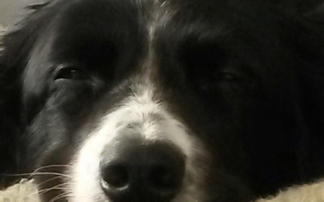 Hunde Foto: Entspannung