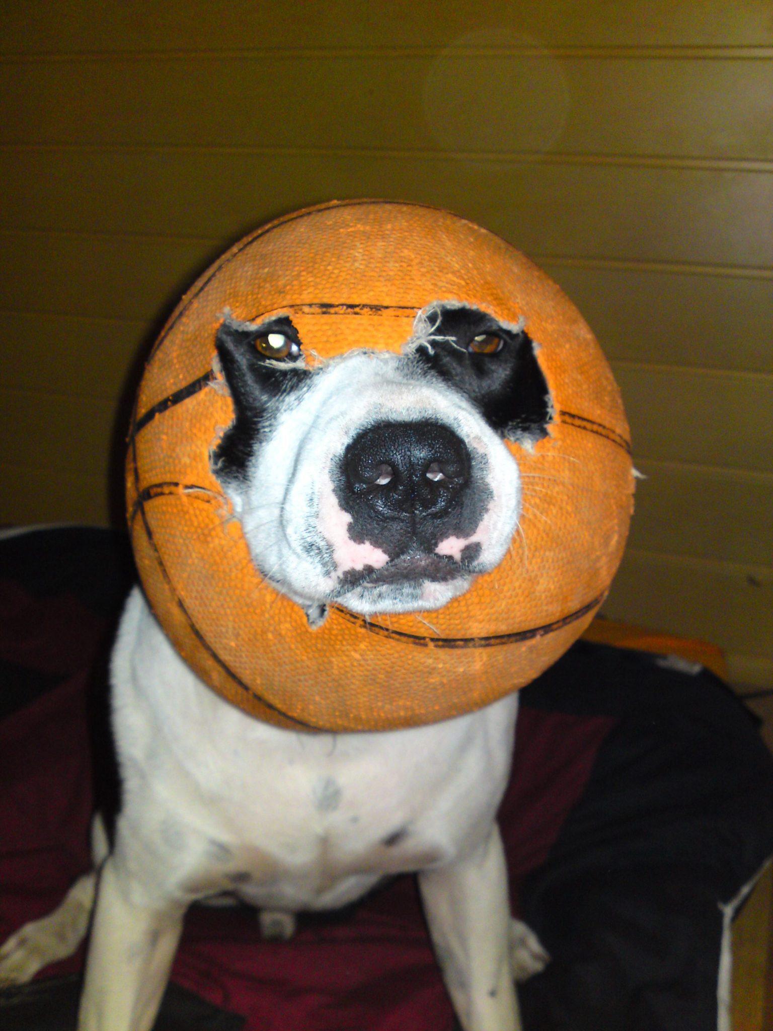 Hunde Foto: Immer zu neugierig