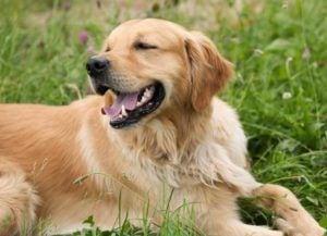dog-1192029_1920
