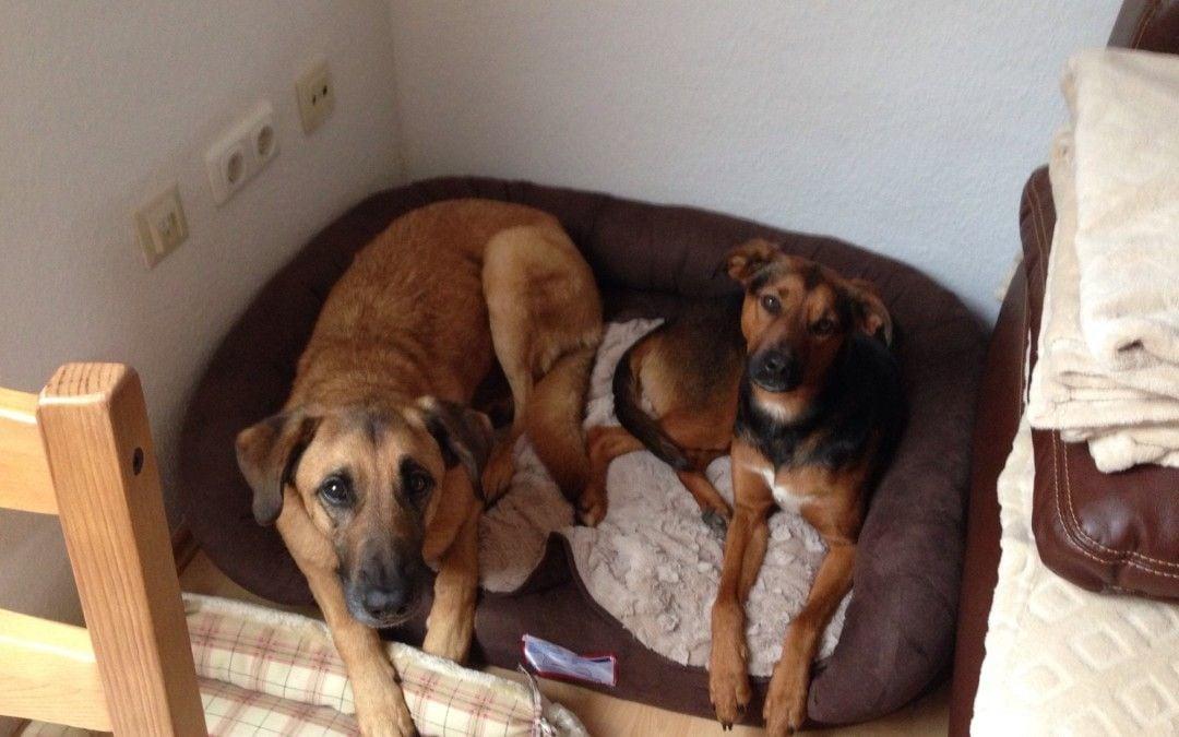 Hunde Foto: Anja und Flo&Conner – Flo&Conner