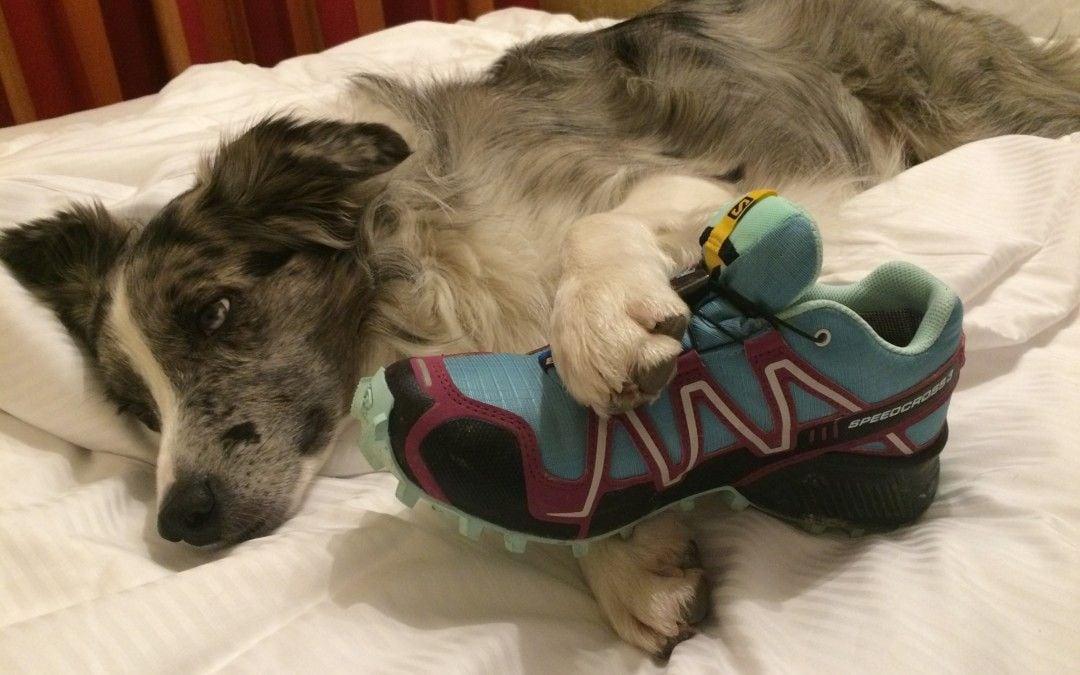 Hunde Foto: Missy und Abby – Null Bock
