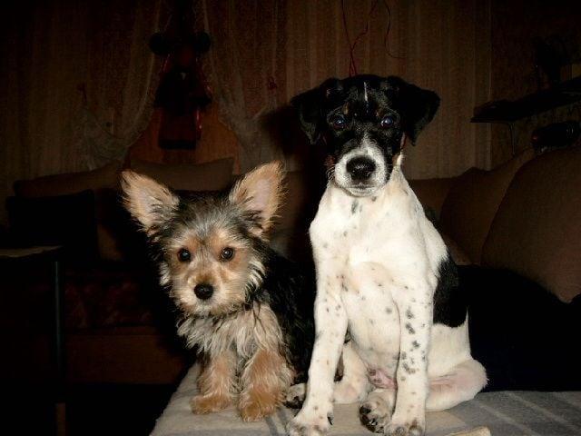 Hunde Foto: Bettina und Gismo &Mogli – Meine zuckermäuse