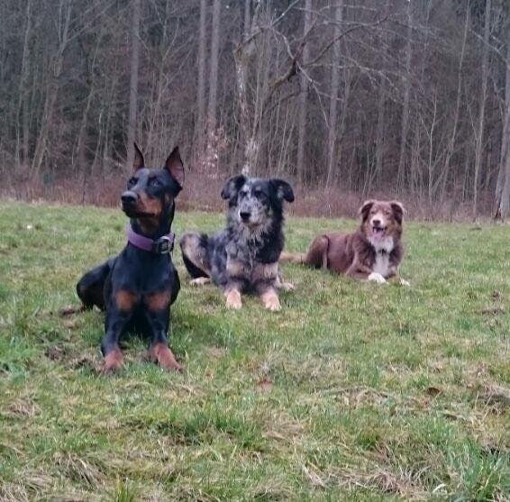 Hunde Foto: Nicole und Freya und die Jungs – Die drei vom Altenberg