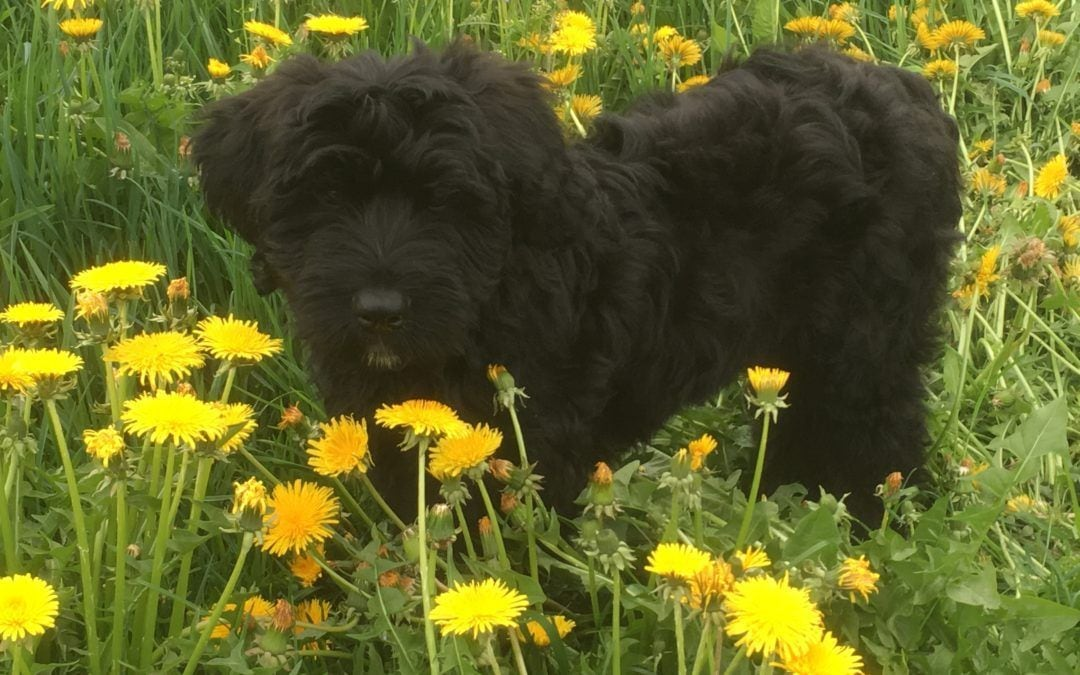 Hunde Foto: Lorenz und Mira – Frühlingsgefühle