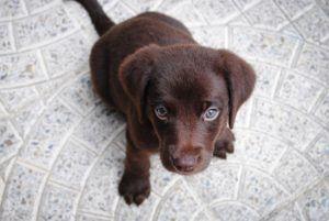 puppy-1082141_1920