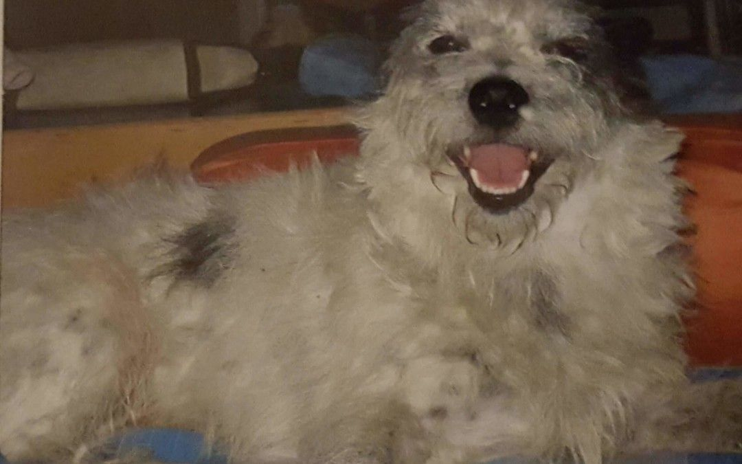 Hunde Foto: Gabriele und Prinz – Lach mal