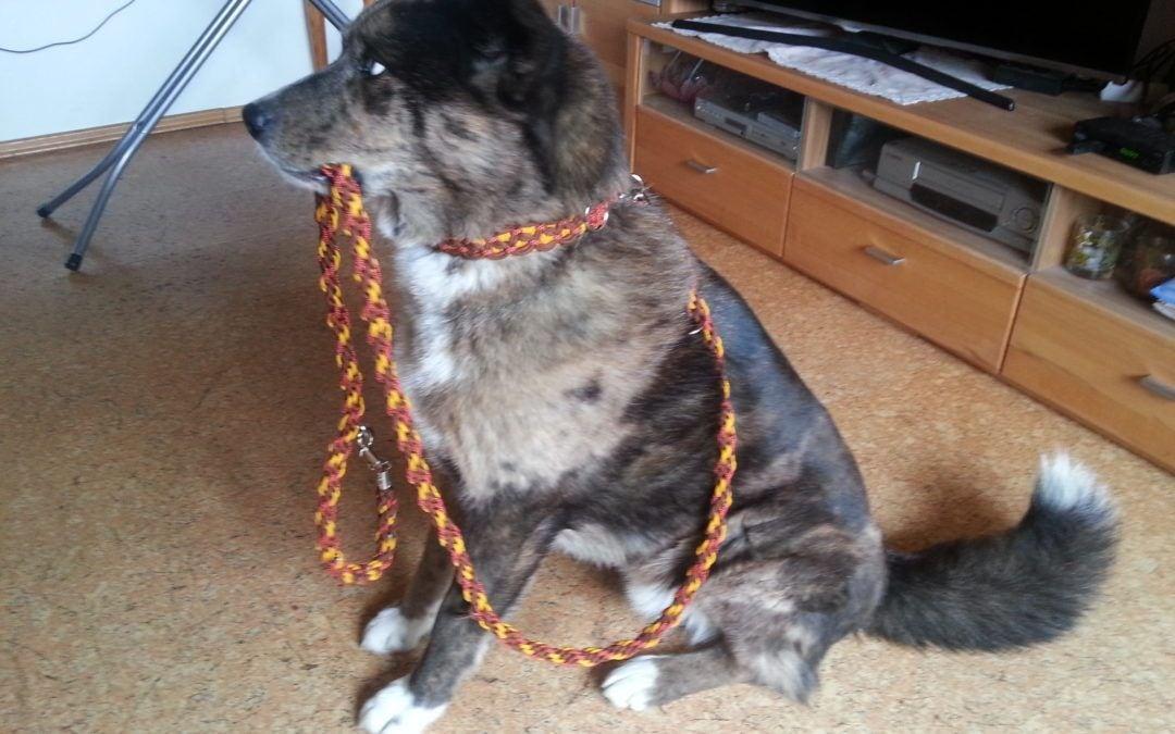 Hunde Foto: Sonja und Charly – Bin bereit zum Gassi gehen