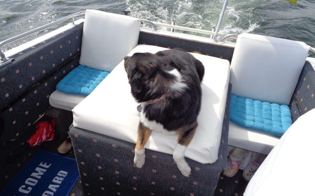 Hunde Foto: Detlef und Chip – Seehund