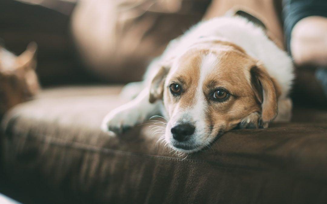 Tierpension statt Mittelstreifen