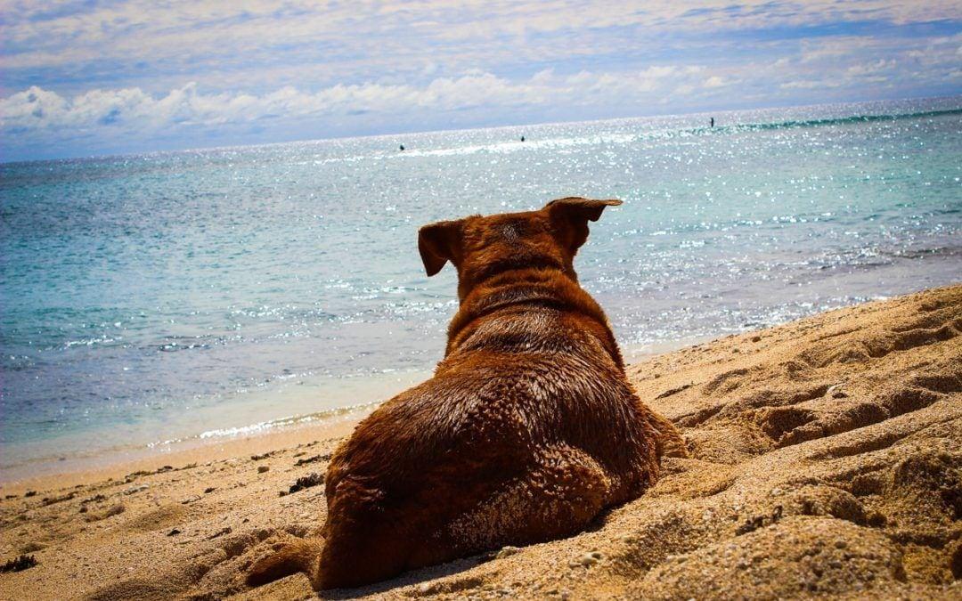 Mit dem Hund in den Urlaub?