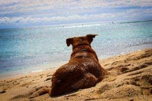 Hund Urlaub Strand