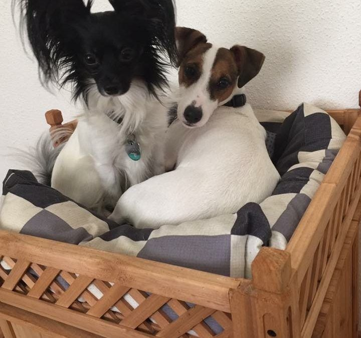 Hunde Foto: Melanie und Filou & Charlie – Der Streit ums Bett