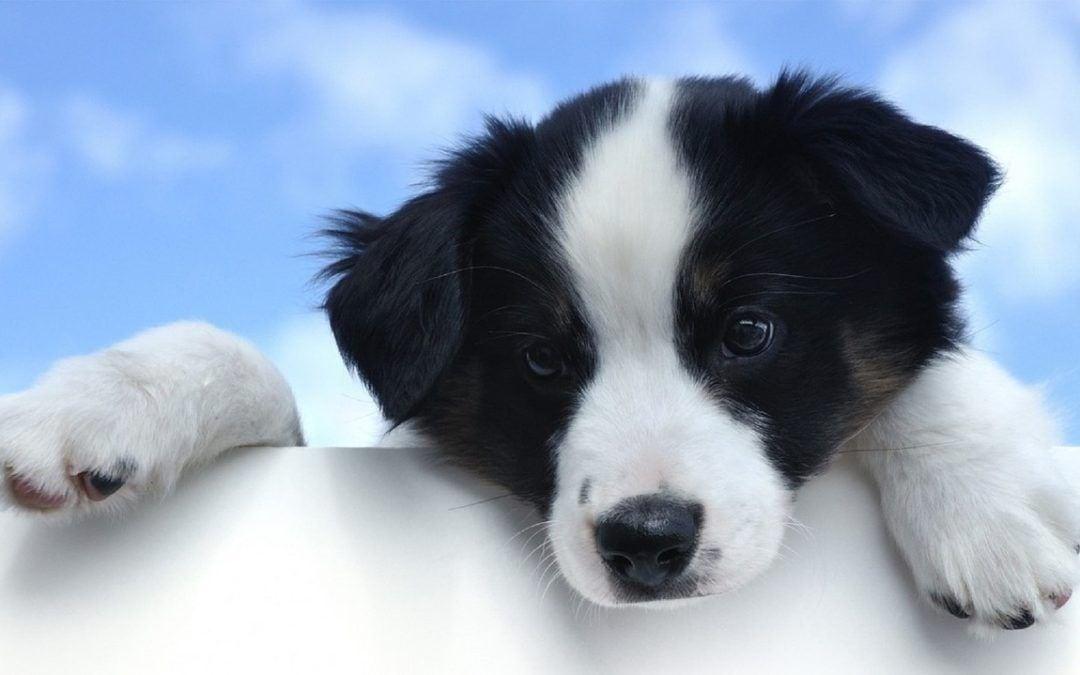 Das richtige Hundefutter finden
