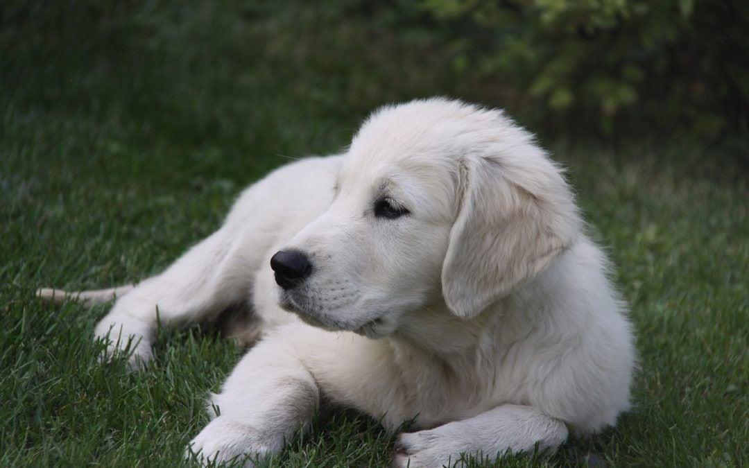 Das beste Futter für Ihren Hund