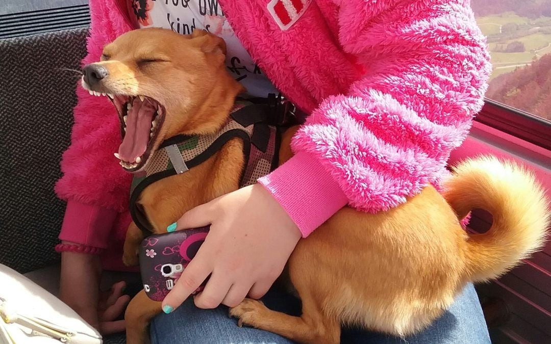 Hunde Foto: Agnes und Milo – Gondelbahn-gähn!