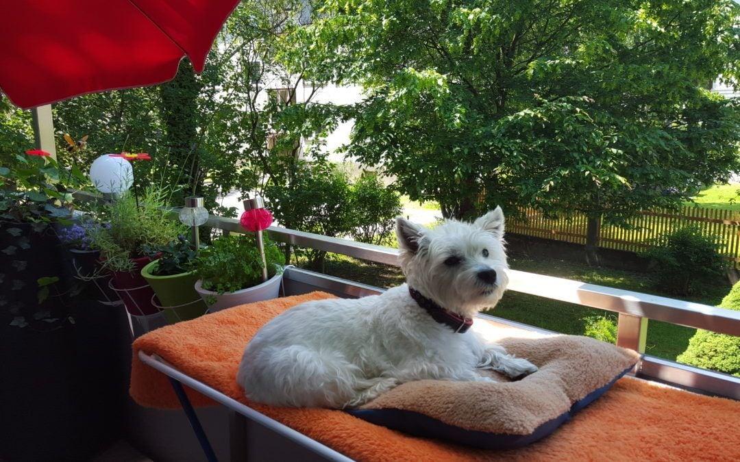 Hunde Foto: Waltraude und Emy – Mein Lieblingsplatz