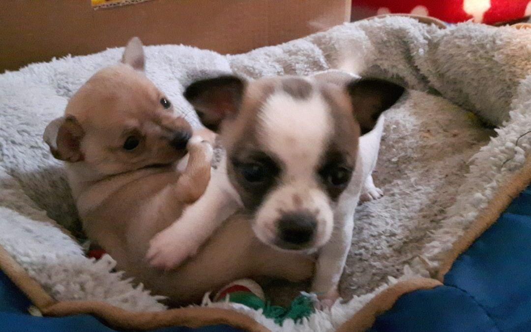 Hunde Foto: Anne und Rocky  u. Pi – Rabauken