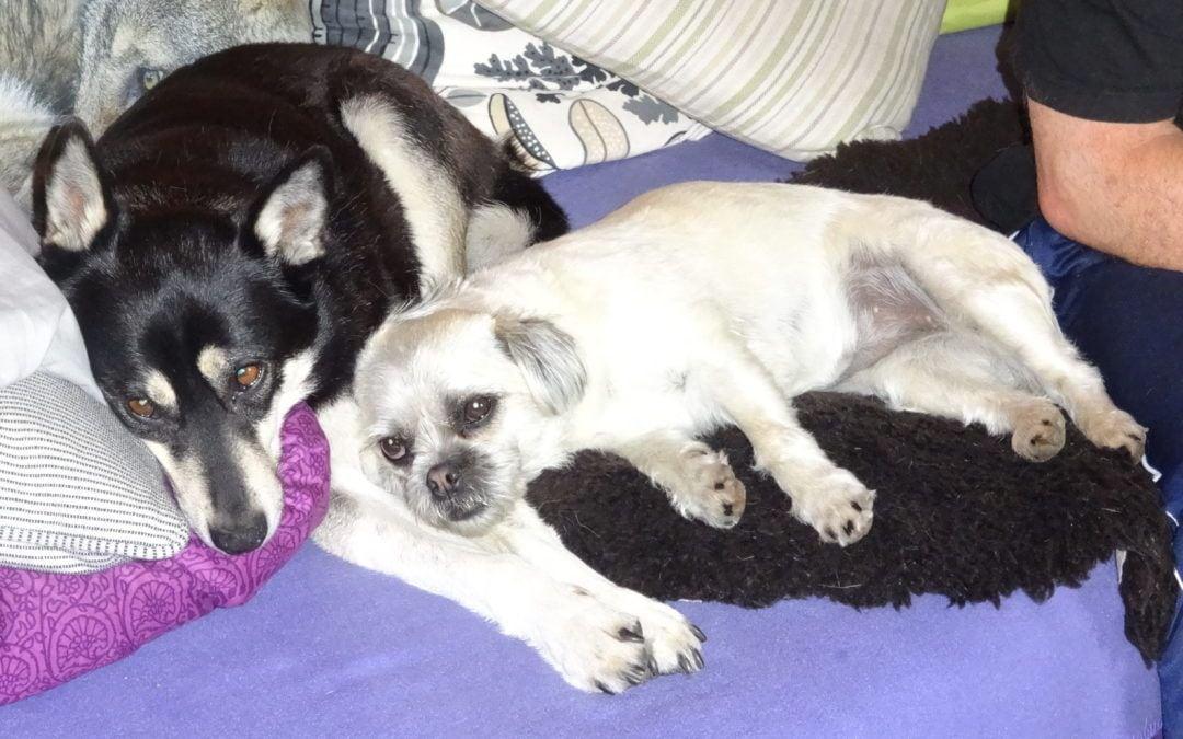 Hunde Foto: Jolanda und Mia u àngel – Ruhe vor dem Sturm