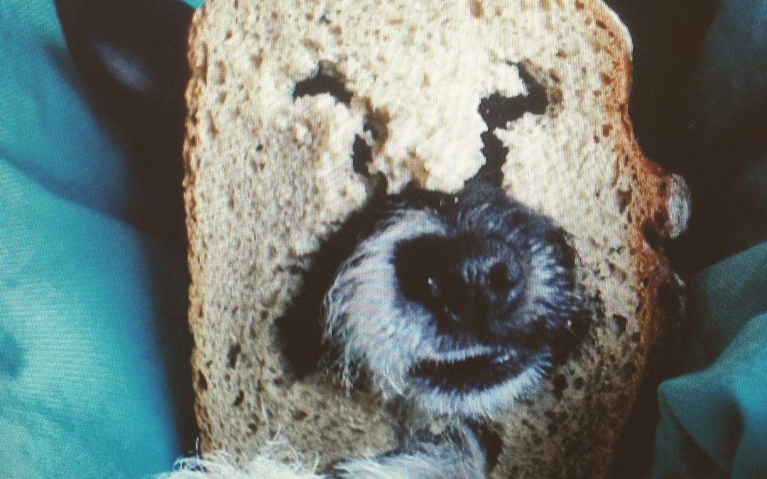 Hunde Foto: Sina und Kuni – Brotbär Kuni