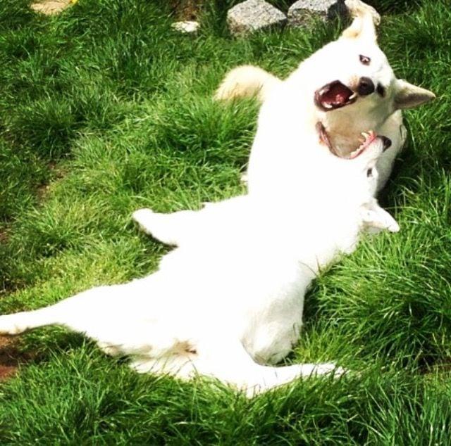 Hunde Foto: Sabine und Quai und Mandy – Liebe mit Biss