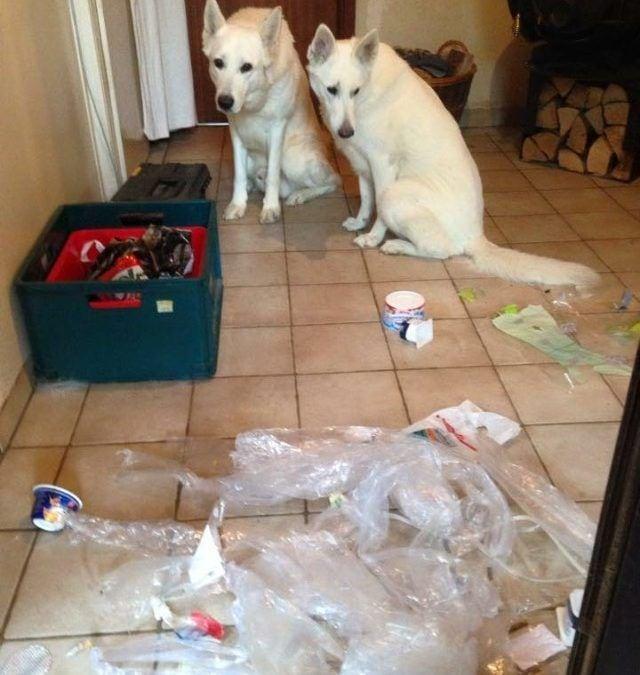 Hunde Foto: Sabine und Quai und Mandy – Das waren wir nicht, ehrlich!!!