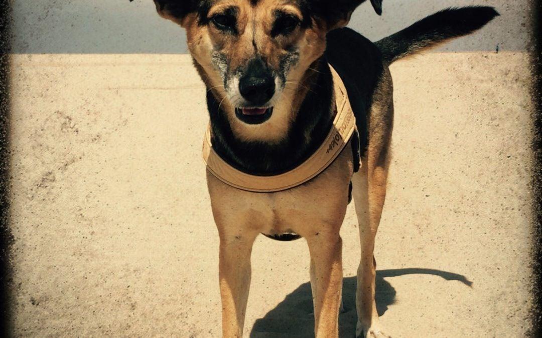Hunde Foto: Christiane und Milla – Die die Weite liebt