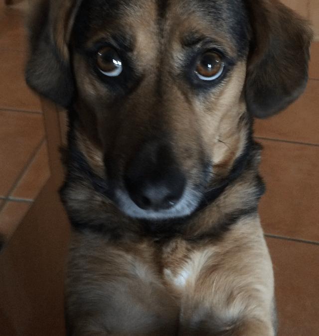 Hunde Foto: Tanja und Luke – Ich war's wirklich nicht